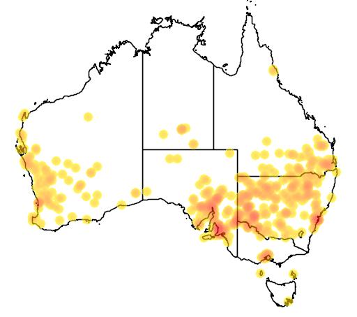 Emex australis