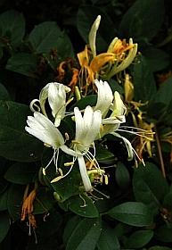 Flowers image by Zen